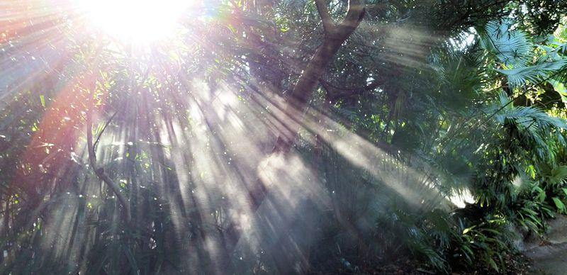 Oración de Iluminación Divina