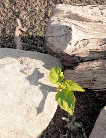 seedling growing in fertile soil