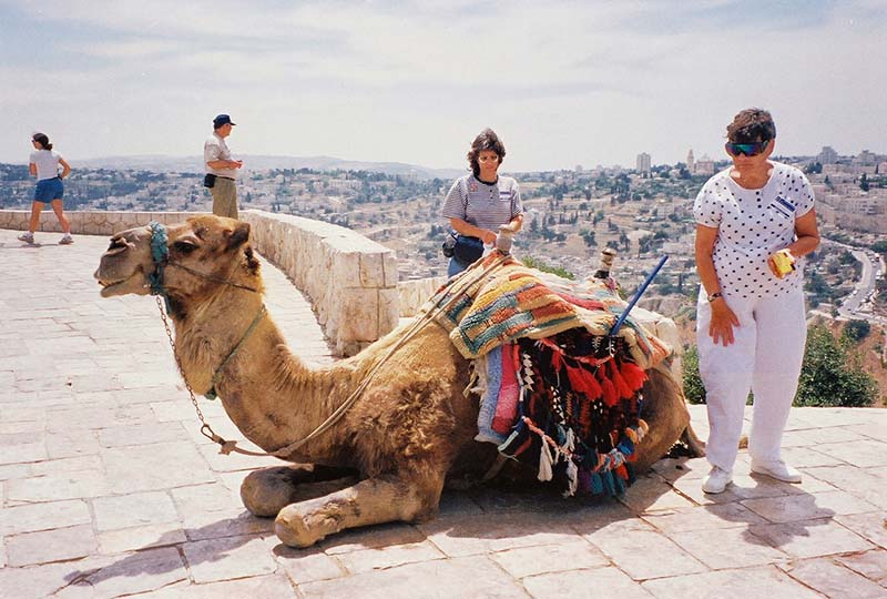Camel and tourists at top of Mount of Olives