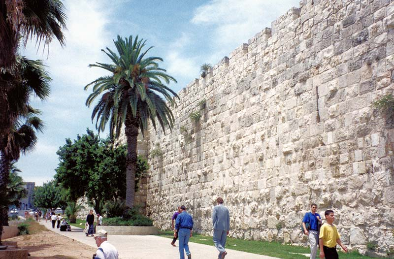 Palm and date trees at Jerusalem wall